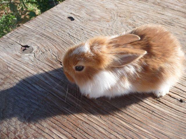 Baby Bunnies For Sale In Lake Point Utah Classifieds Ksl Cute