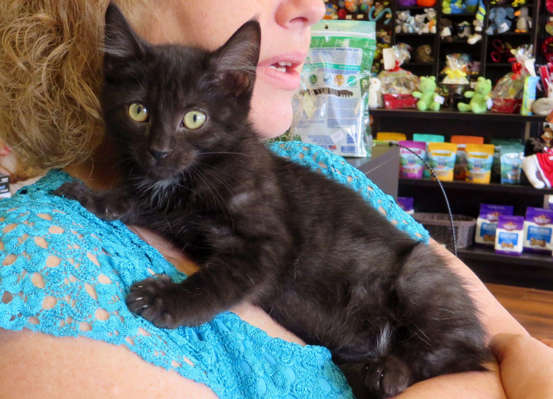 Adopt C59371 Sheldon on Pet adoption, Animal shelter
