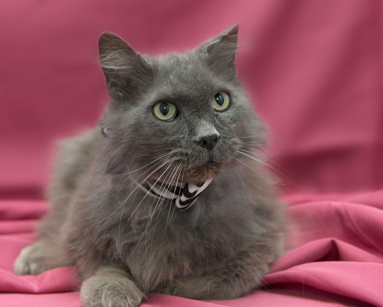 Smokey Found A Foreverhome On 3 10 14 Opt2adopt Smokeythecat Livessaved Humane Society Animals Animal Snacks