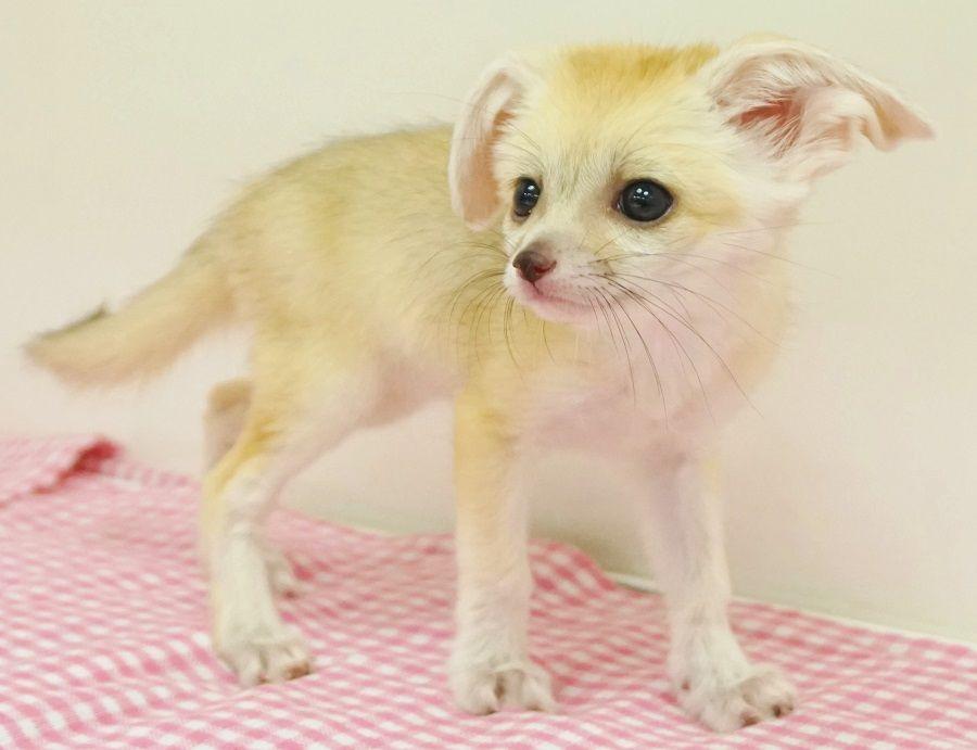 と おしゃれまとめの人気アイデア Pinterest 87marumaru かわいい動物の赤ちゃん 可愛すぎる動物 ペット