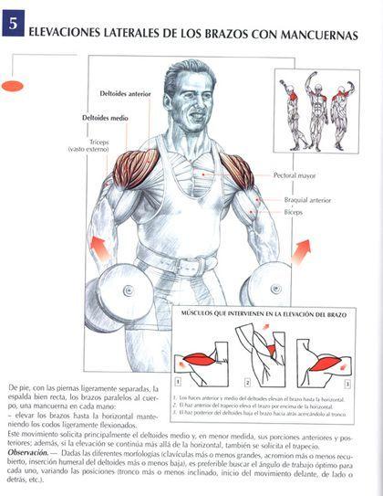 Ejercicios para biceps sin pesas yahoo dating