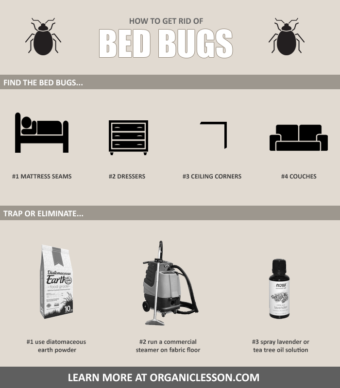 7 Natural Ways To Get Rid Of Bed Bugs At Home In One Day Good To