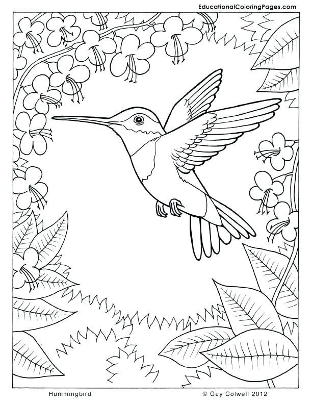 Hummingbird Coloring Pages Hummingbird Coloring Pages Coloring Pages Hummingbirds Hummingbird Coloring Bird Coloring Pages Animal Coloring Pages Coloring Books