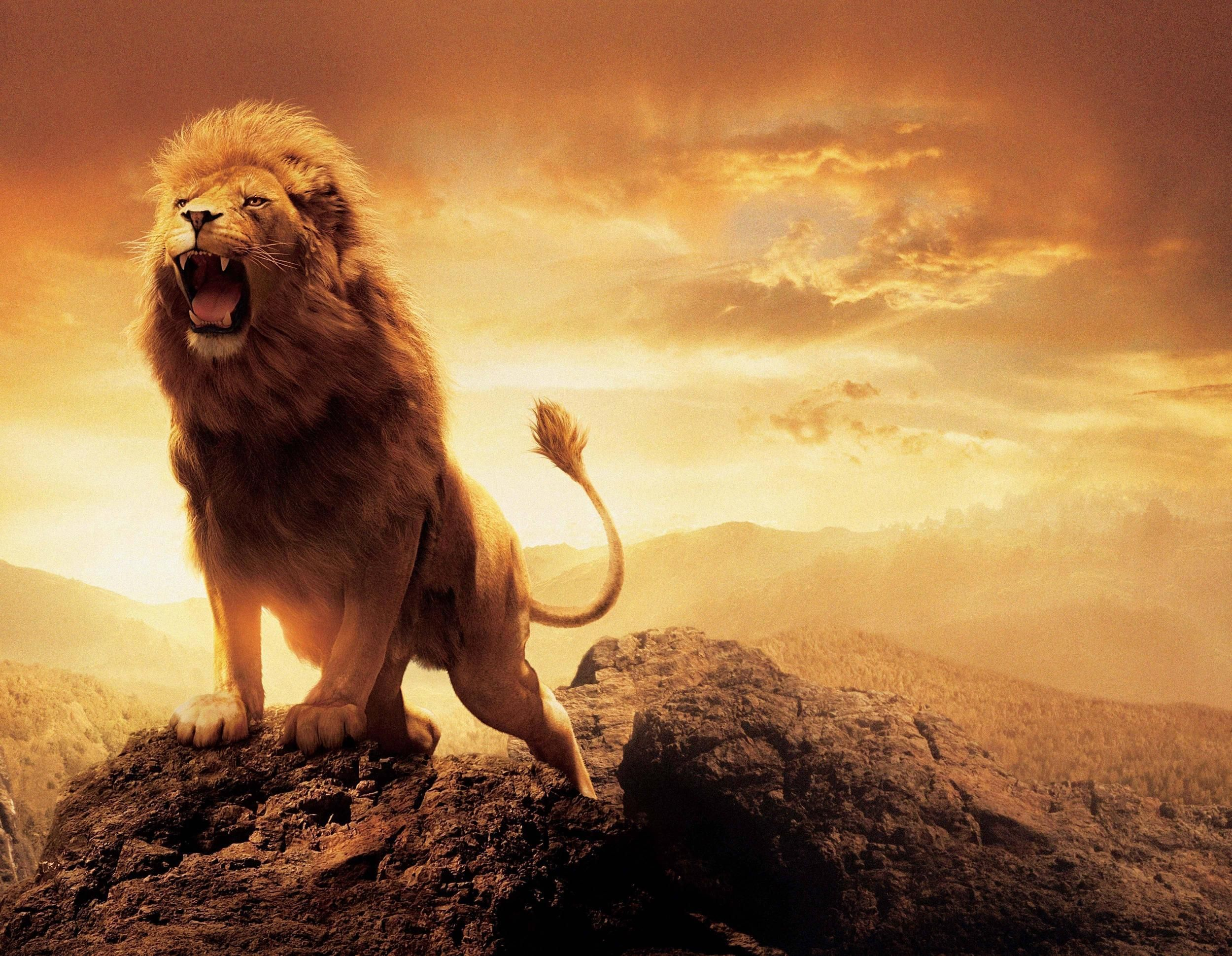Images Of Lions Wallpapers 30 Wallpapers Hd Wallpapers Lion