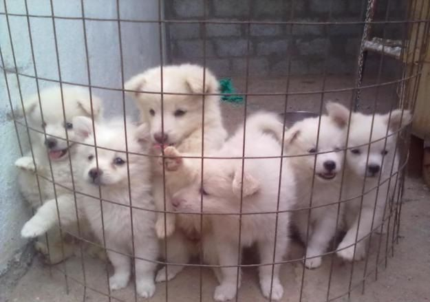 Pomeranian Puppies Price In India Zoe Fans Blog