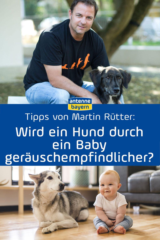 Martin Rutter Live Bei Antenne Bayern Die Antworten Zum Nachhoren Tipps Zur Hundeerziehung Hundeerziehung Hunde