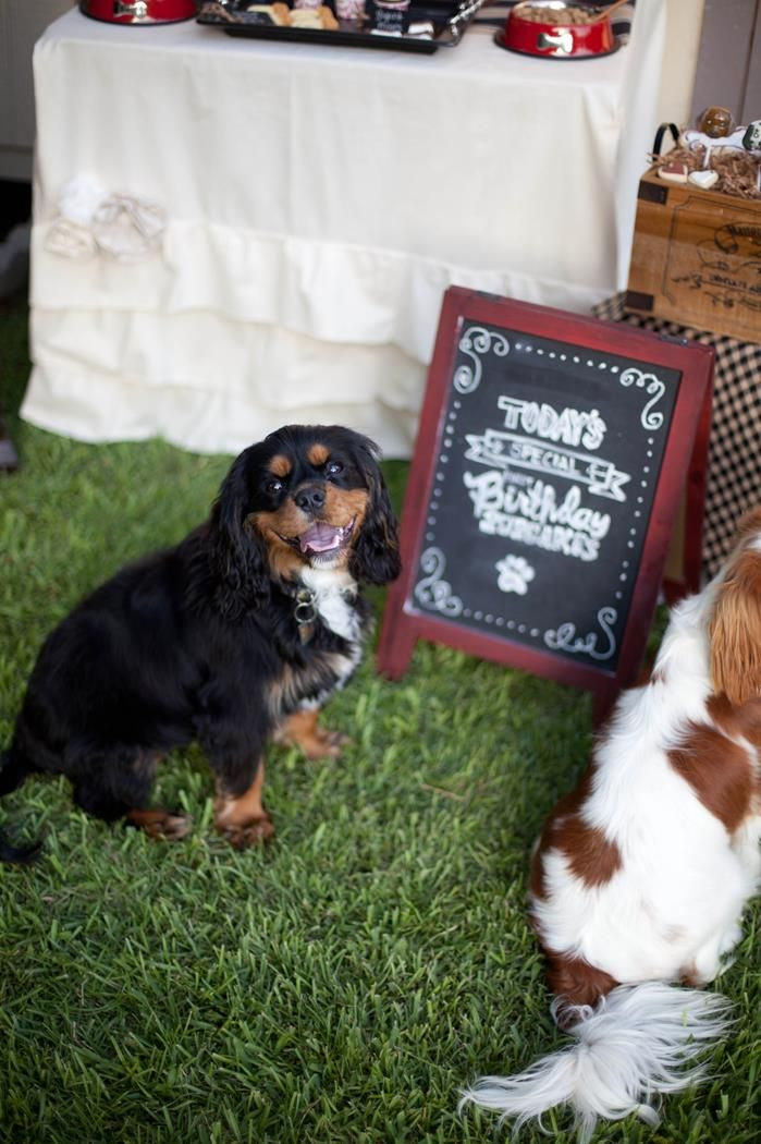 Dog Birthday Party #planning #idea #decorations #bones #cake (20)