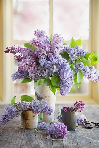 These Wonderful Flowers Are Thought To Represent The First Emotions Of Love Today That S Expressed Pretty Flowers Flower Arrangements Most Beautiful Flowers