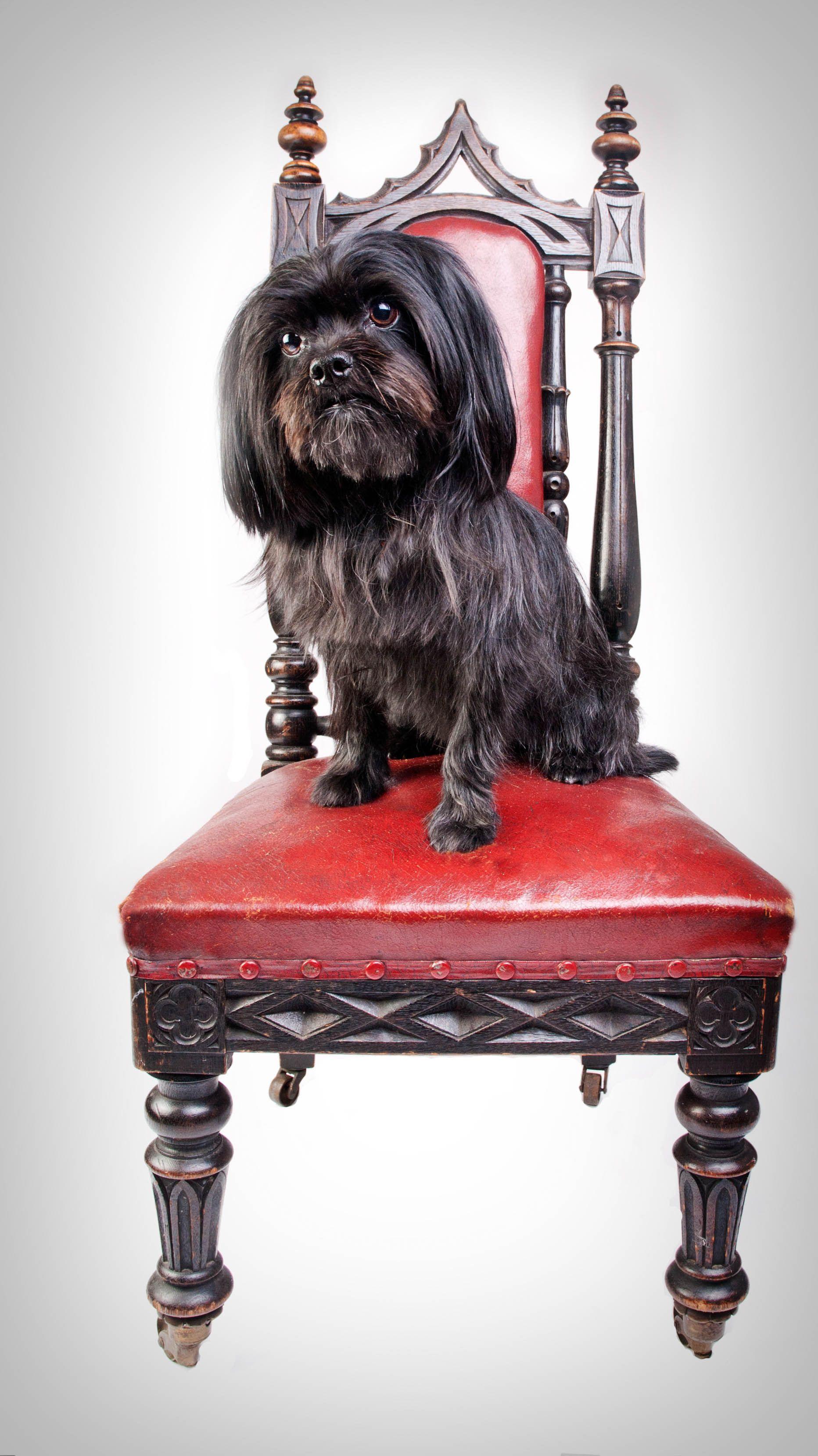 Your Dog's Coach London Ontario Dog Walker www