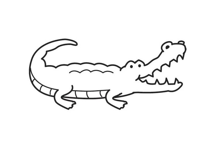 coloring page crocodile | kindergarten puf stuff | pinterest ... - Alligator Clip Art Coloring Pages
