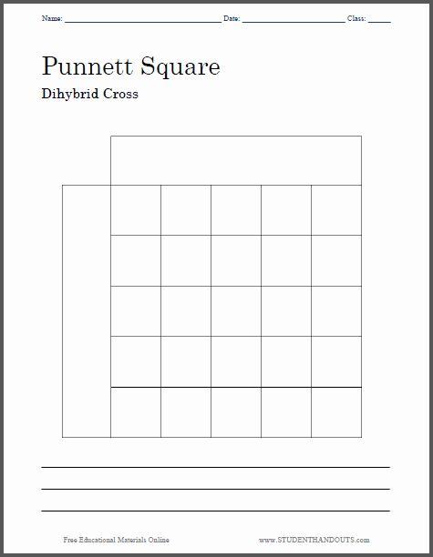 Dihybrid Cross Worksheet Answers New Punnett Square ...