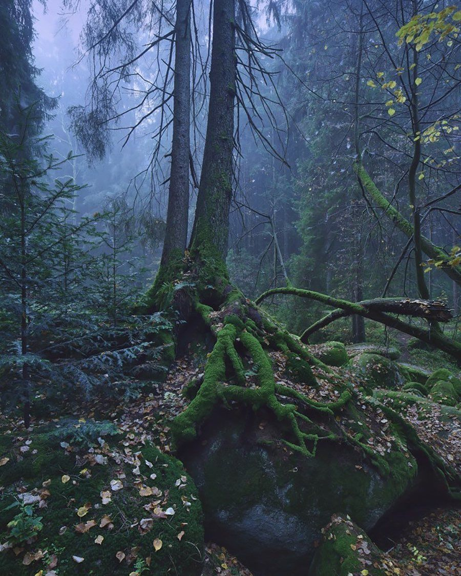 German wild mountain nymphs
