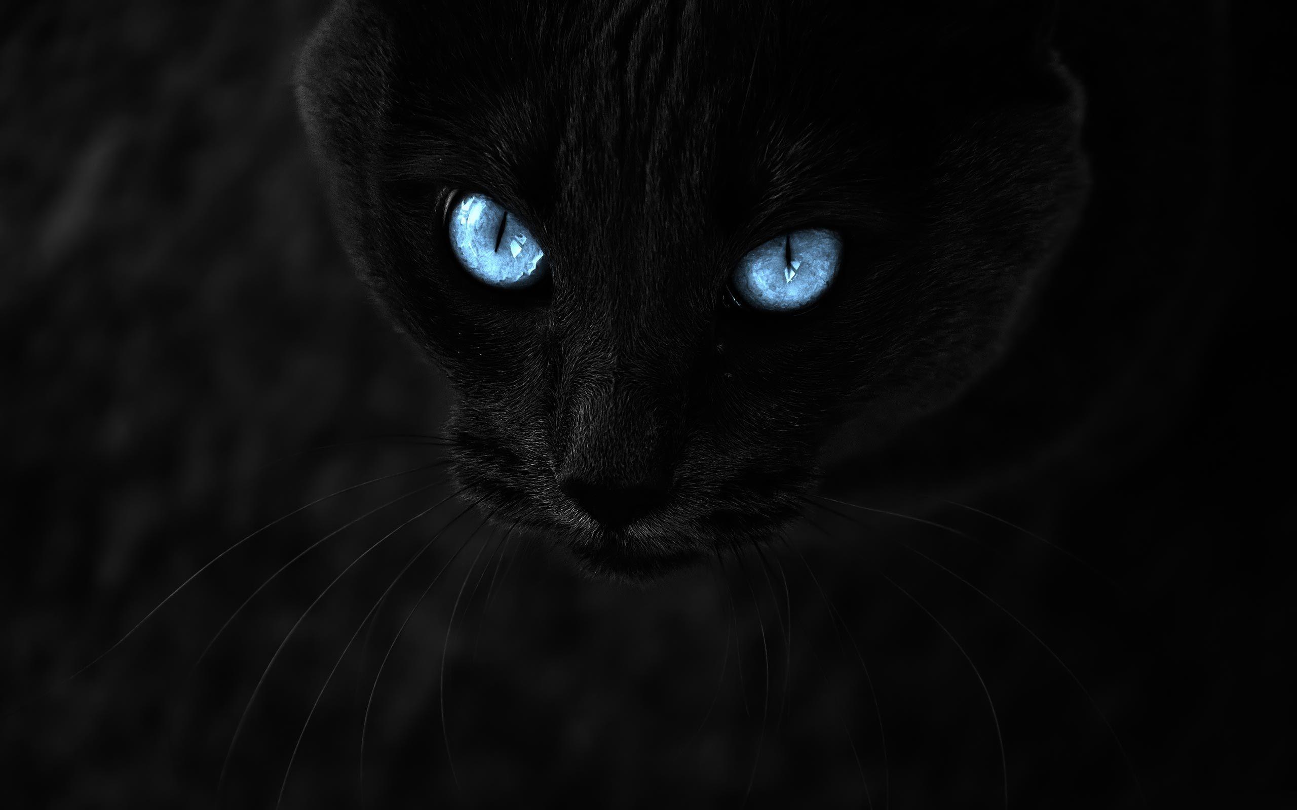 Animals Black Cat Blue Eyes Desktop Wallpapers And Backgrounds Cat With Blue Eyes Cat Wallpaper Black Cat