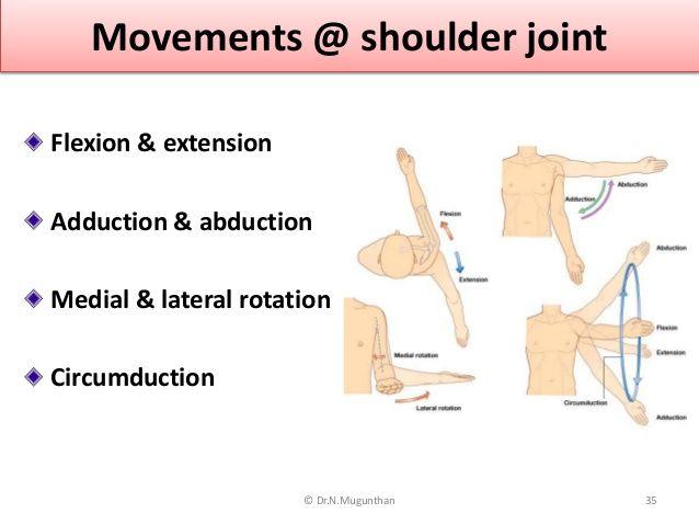 Movements @ shoulder joint Flexion & extension Adduction ...