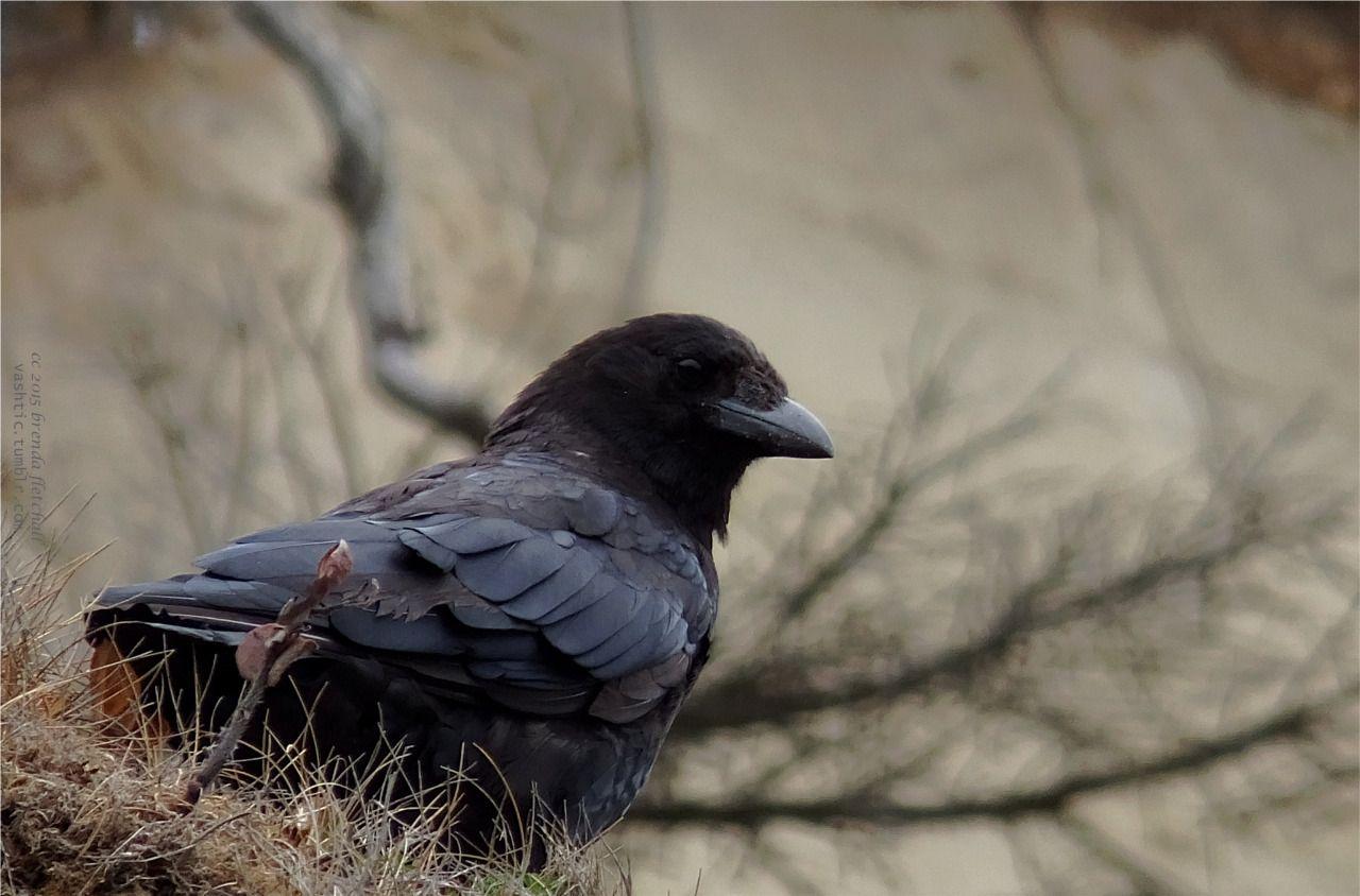 """beebakae: """"Bird's Eye View """""""
