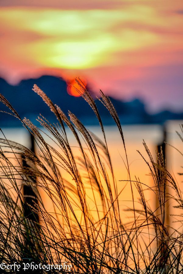 Wheat grass Sunset by Serena Gerfy