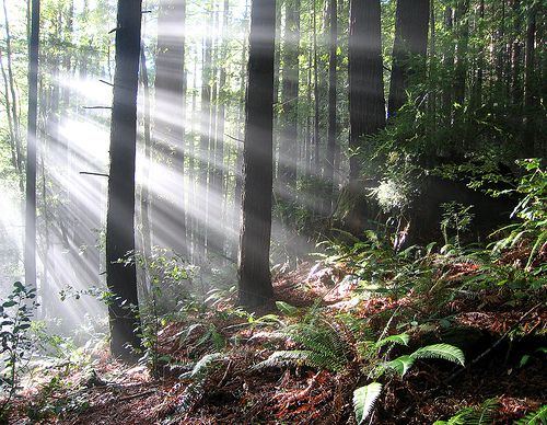 This Gorgeous Picture Comes From Jackson State Forest In California Want To See It For Yourself Book A Monterey Vacation Re Vacation State Forest Nature Tree