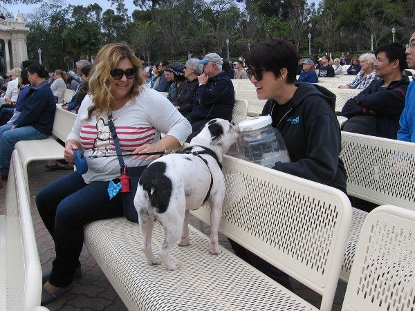 Bark At Balboa Park Features Pooches On Parade Humane Society