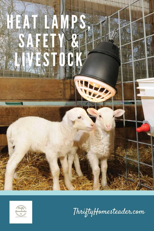 Pin On Raising Goats