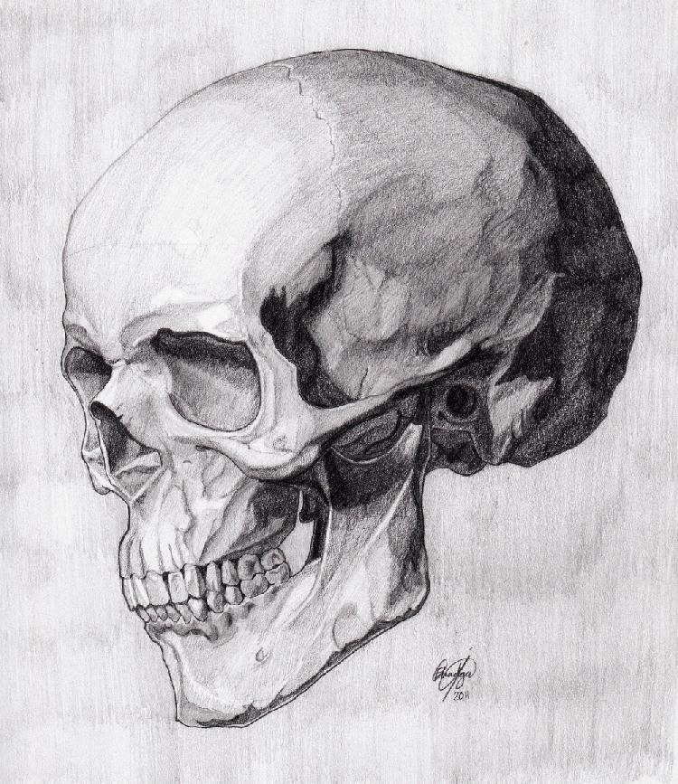 Skull Three Quarter Reverse (Critique) | Art | Pinterest | Schädel ...