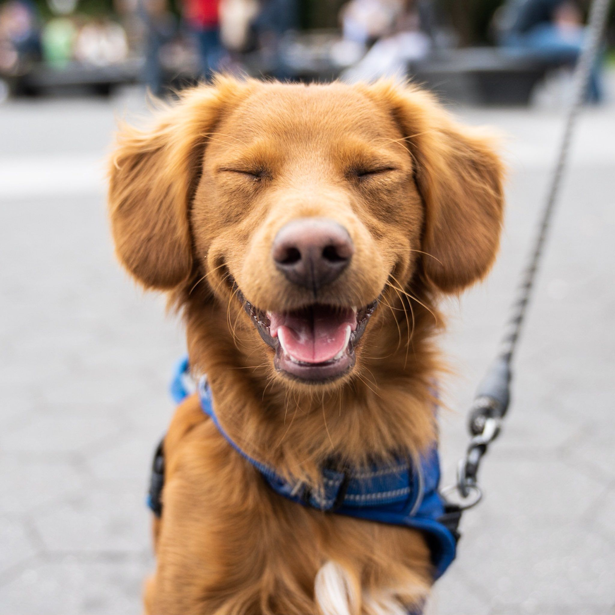 The Dogist on Nova scotia duck tolling retriever, Dogs