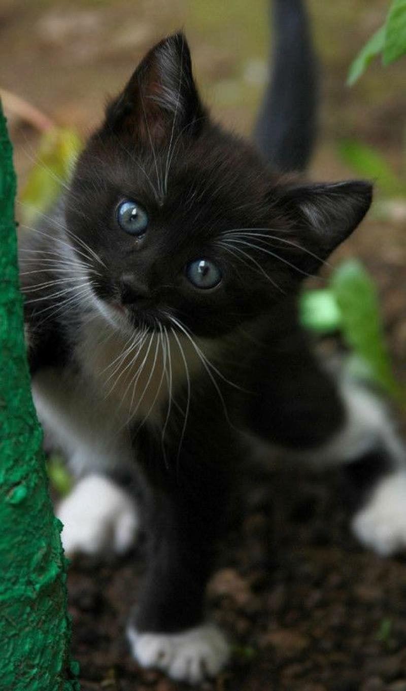 Pin Von Ximena Escala Auf Kitty Cats Baby Katzen Katzen Susse Tiere