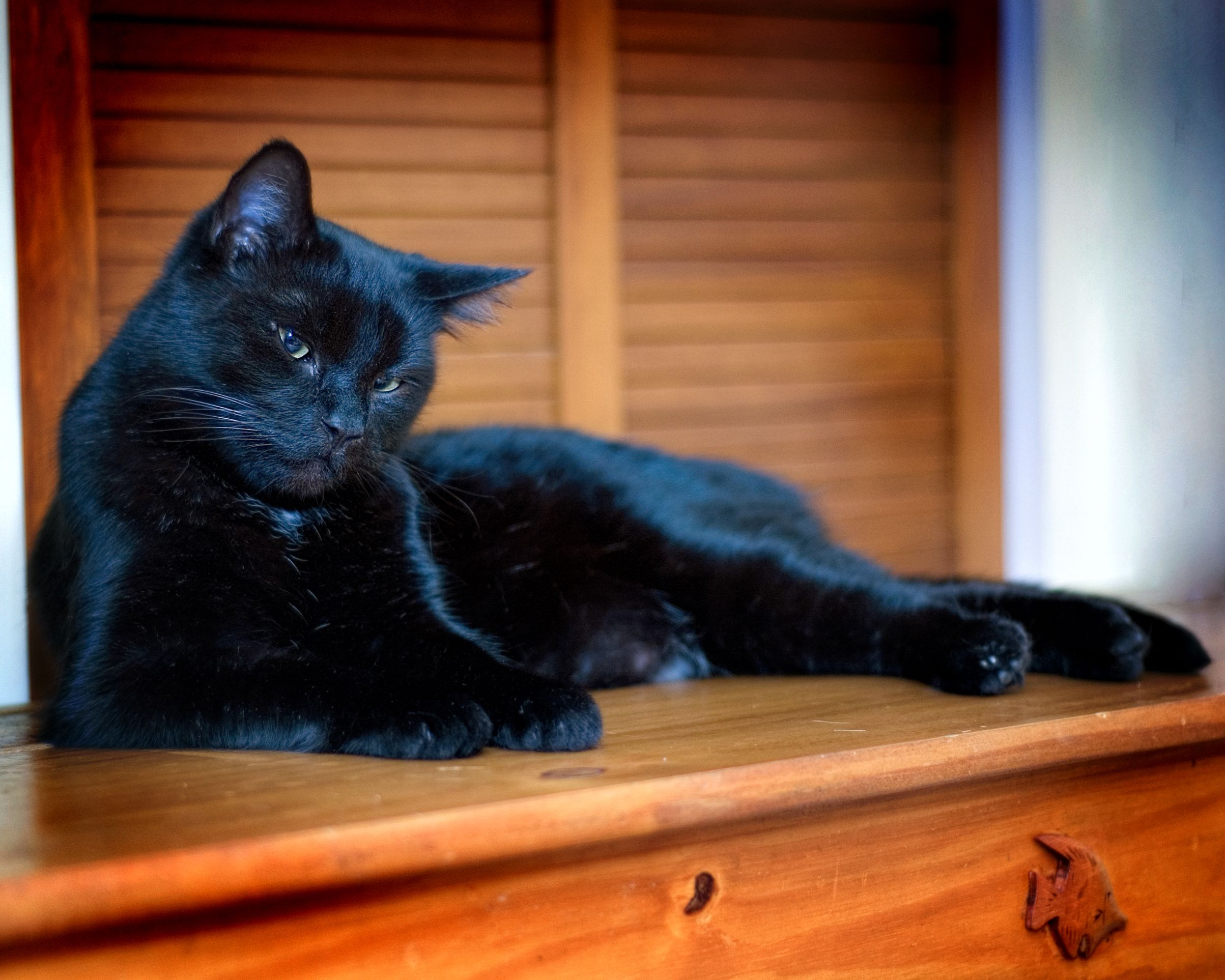 My Aunt's Black Cat - Mr Sparks