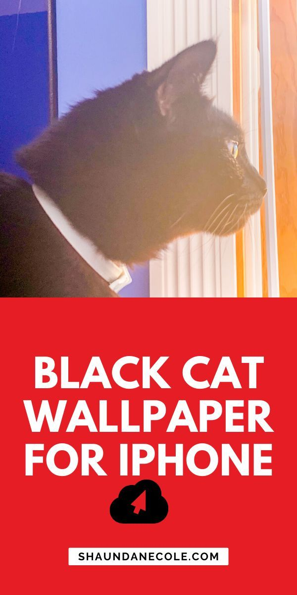 Black Cat Wallpaper For iPhone | I Photograph Black Shelter Cats