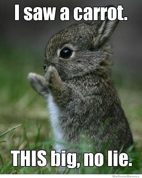 I Saw A Carrot This Big No Lie With Images Baby Animals