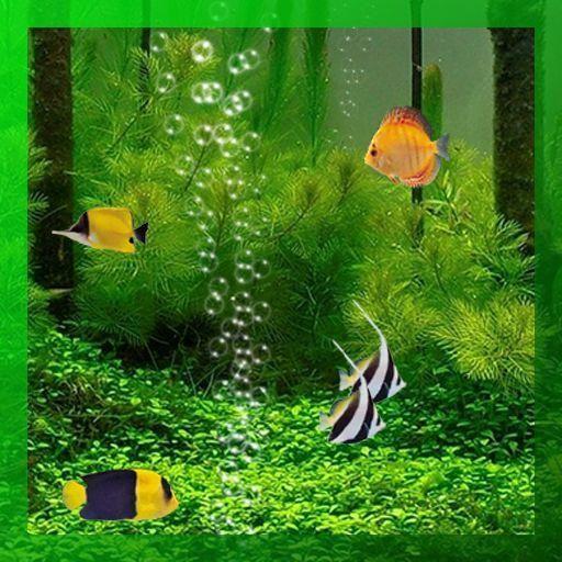 undefined Live aquarium wallpaper 8 Wallpapers Adorable