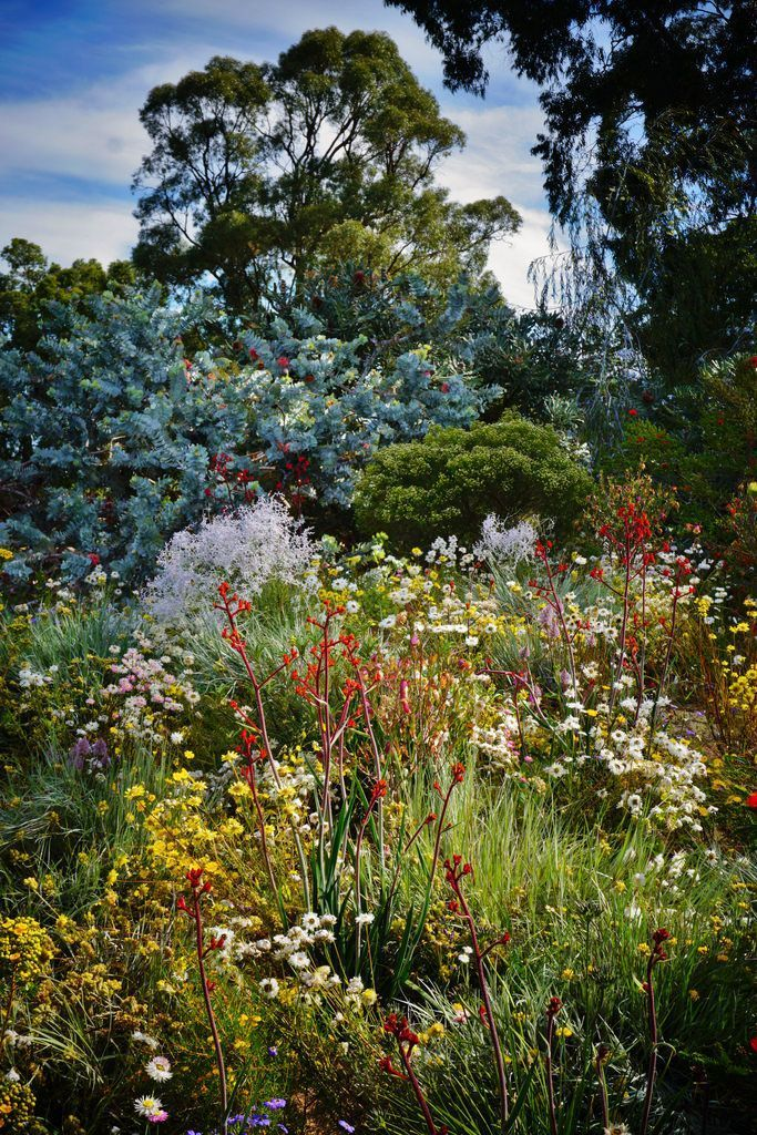 Perennials  #cottage #garden #australian #native #plants cottage garden australi