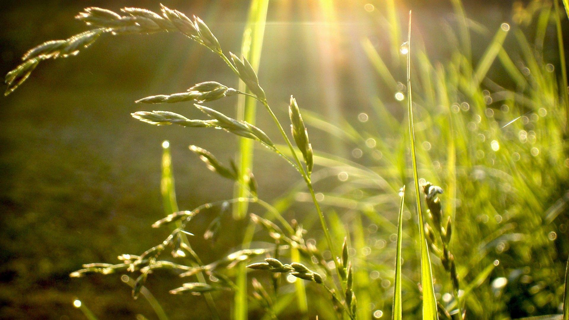 Rain Forest Grass Rain Drops Nature