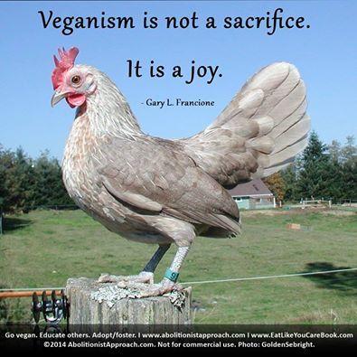 Gary L Francione Bantam Bantam Chickens Vegan Animals