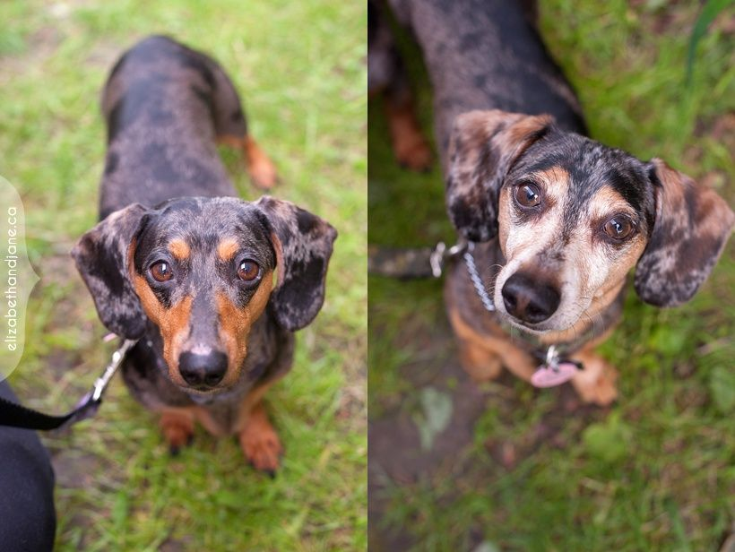 Say Hello To Chloe And Benji A Bonded Pair Who Are Available For