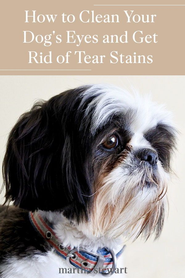 how to get rid of puppy tear stains