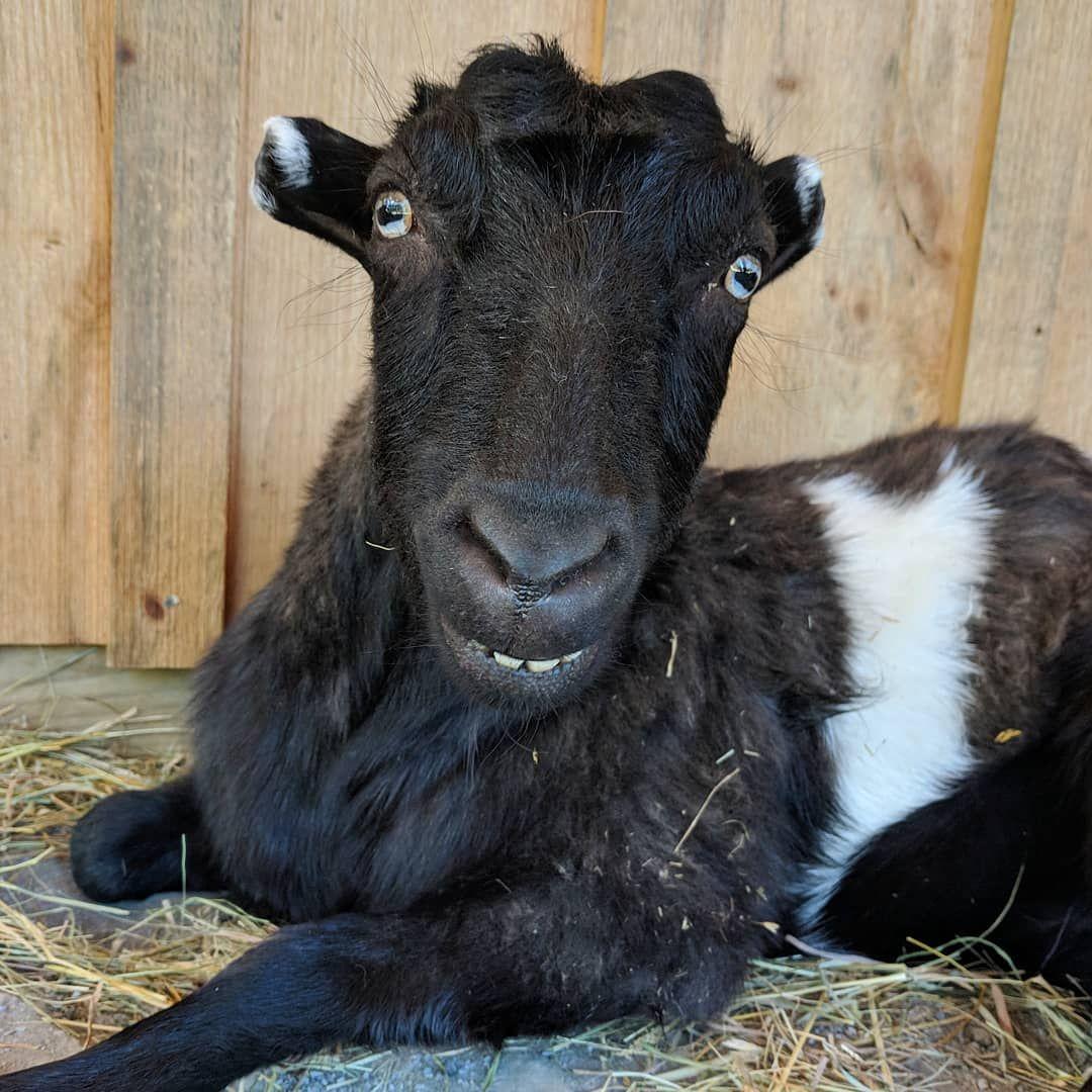 Goats Of Anarchy On Instagram Pilot Goats Anarchy Instagram
