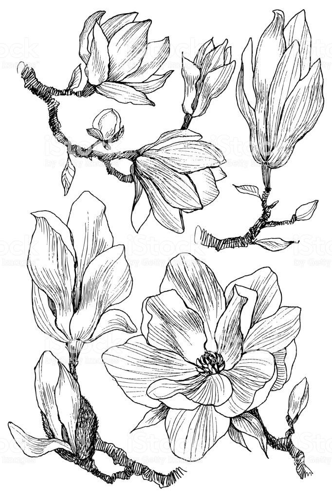 Kolorowanki Dla Doroslych Kwiaty Google Search Line Art Nature Paintings Art