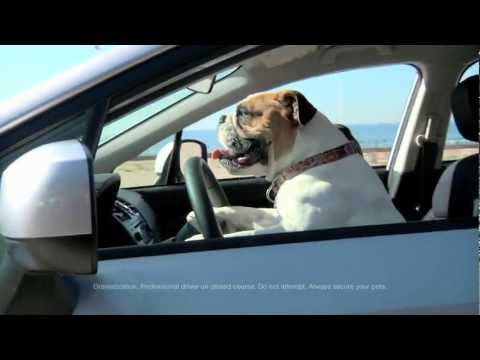 The Beach Subaru Dog Tested Dog Approved Commercial Funny