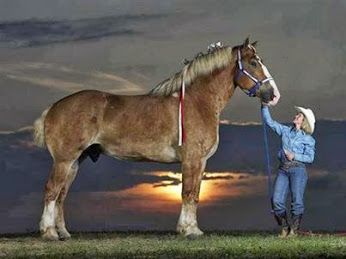 world s tallest horse say hello to big jake an extremely tall rh pinterest fr