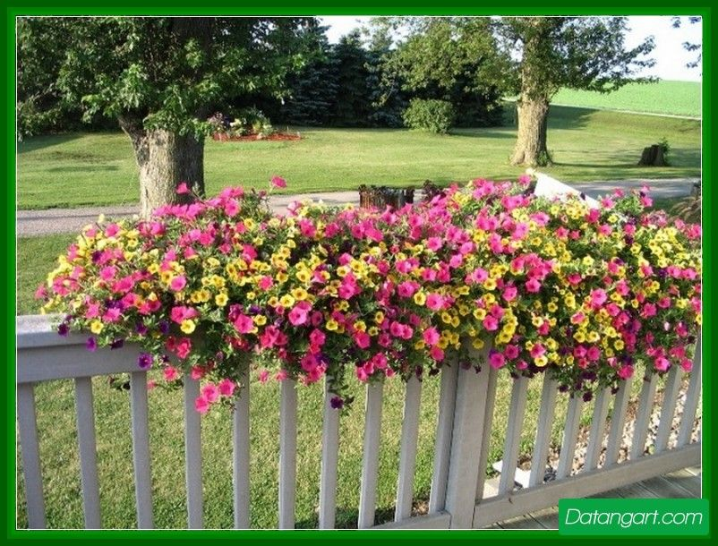 Deck Rail Planters Lowes Design Idea   Home Landscaping
