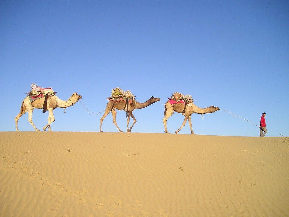 Dromedarios En El Desierto Camello Animales Caravanas