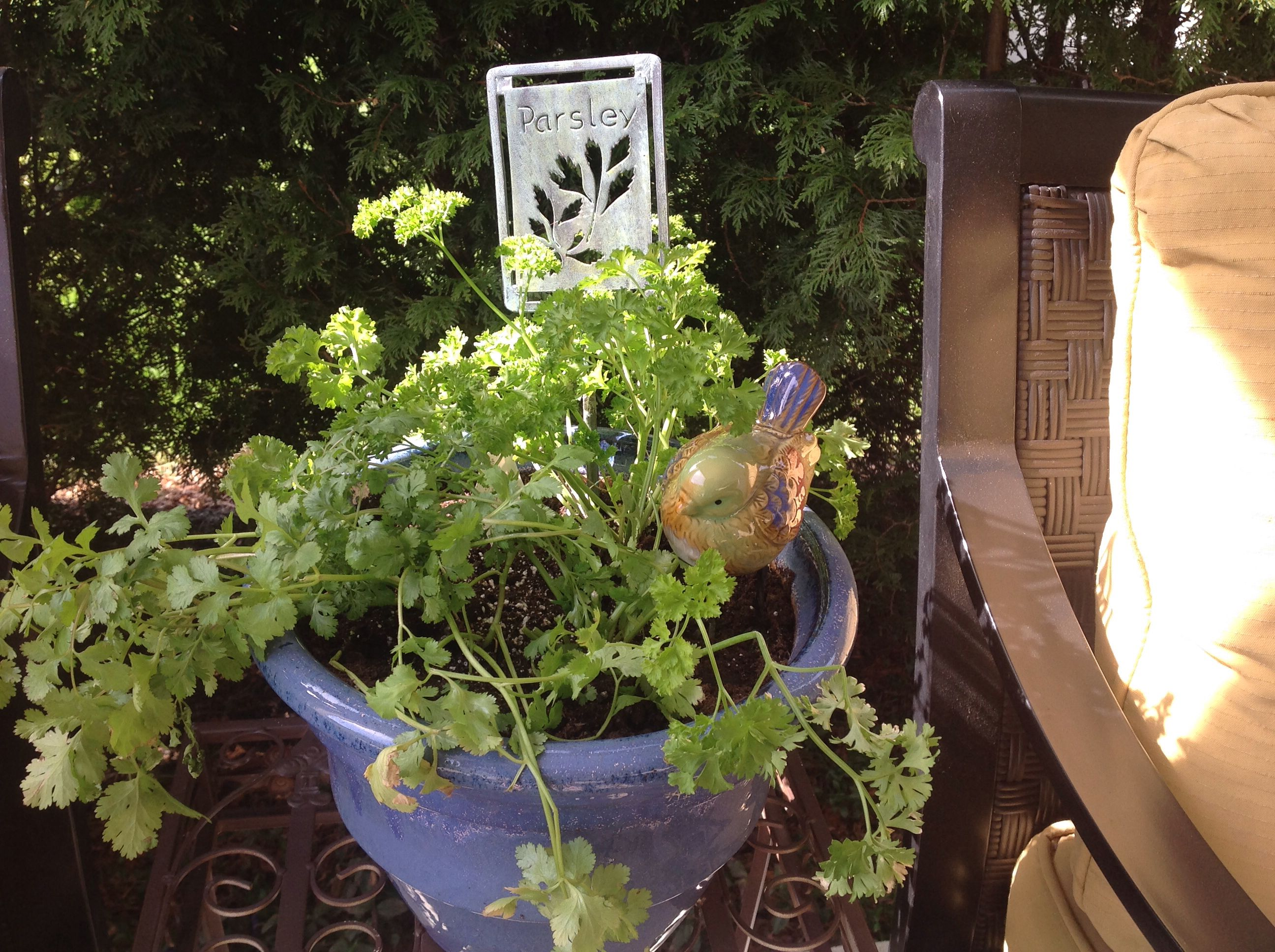 Planted some herbs today....thought the bird just needed to be there !