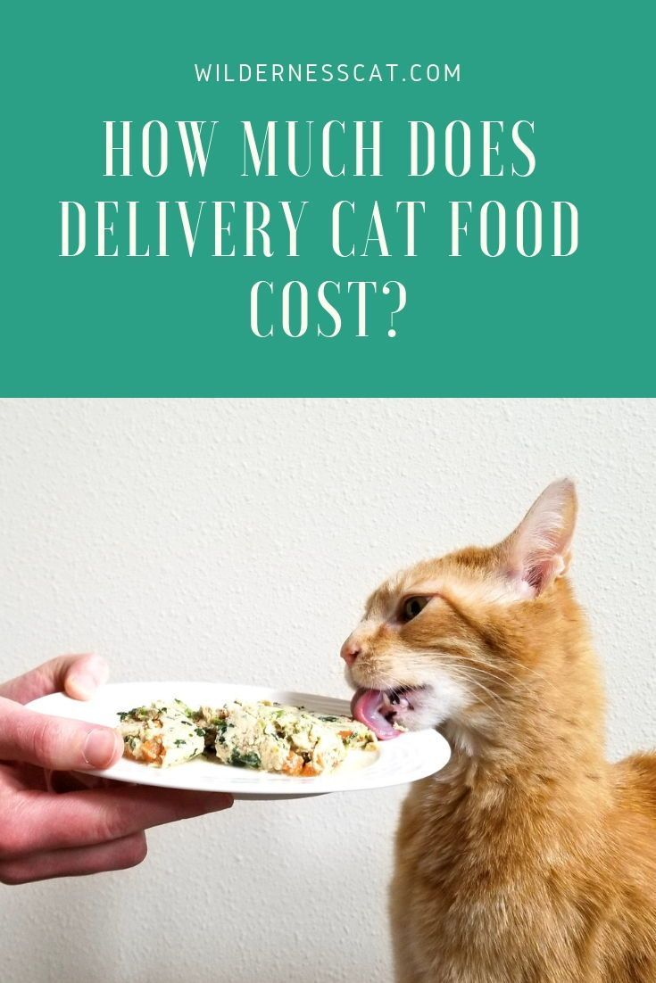 How much does nom nom cat food cost cat food cat food