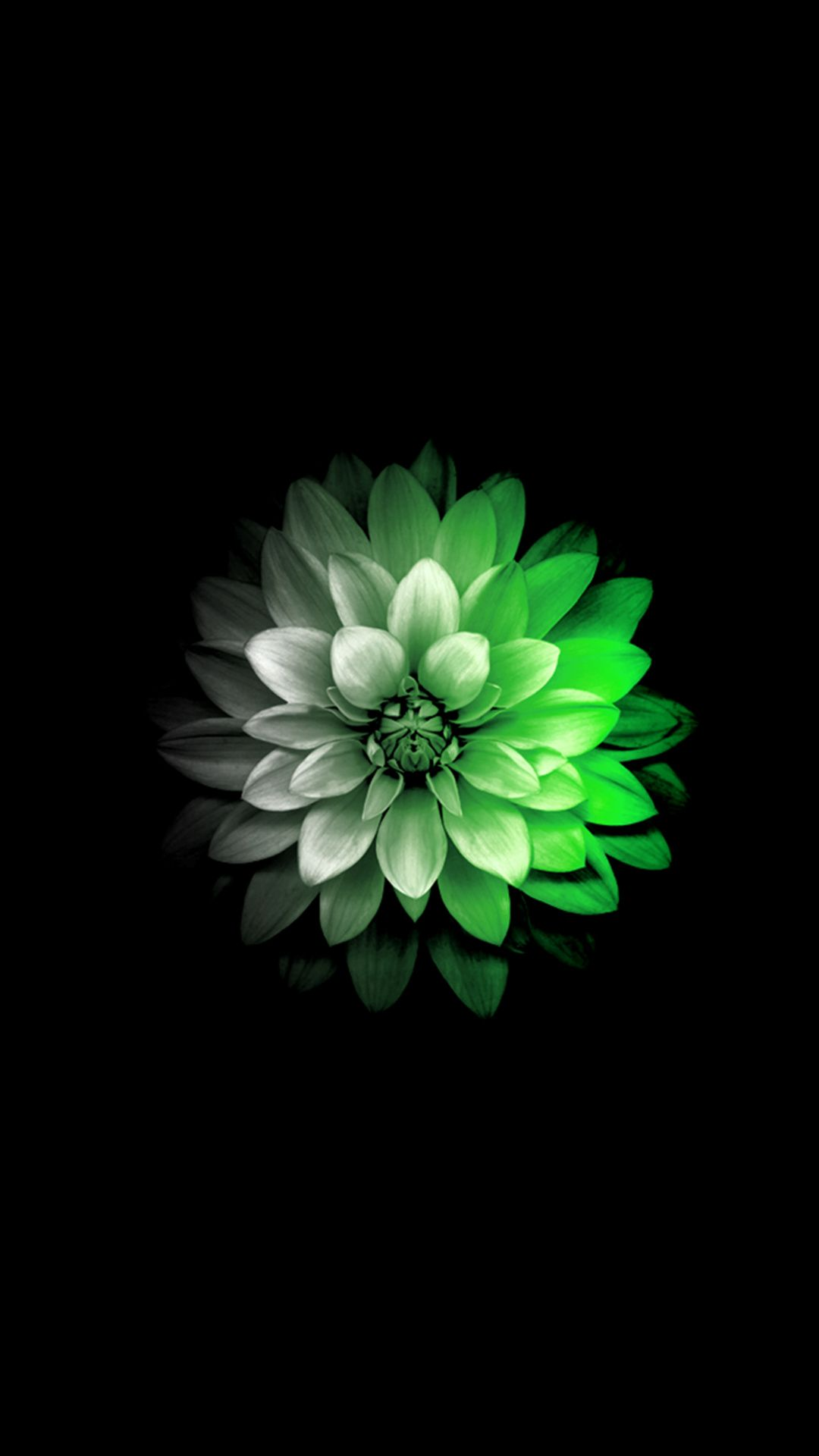 Black And White And Green Flower Iphone Wallpaper Beautiful Flowers Wallpapers Flower Wallpaper
