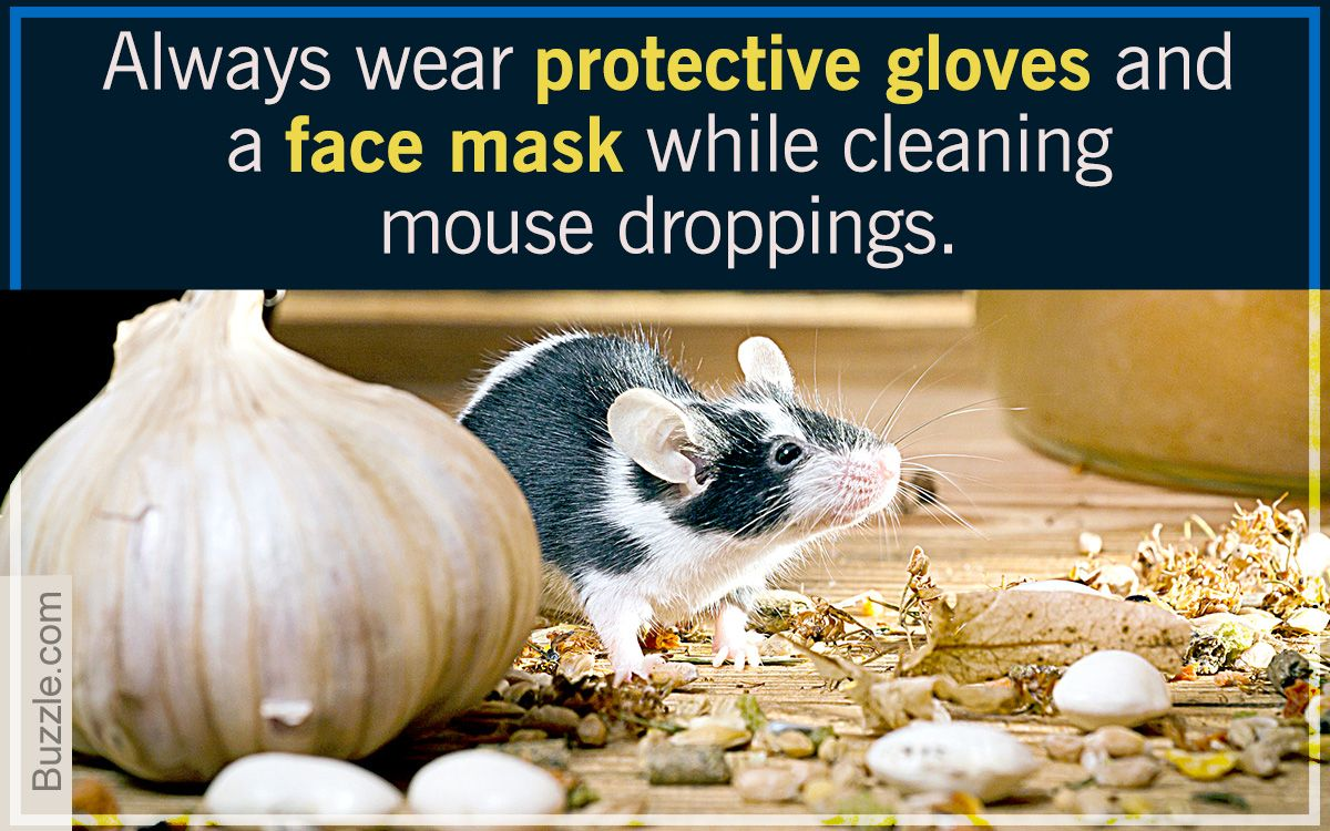 Cleaning mouse droppings cleaning carpet household