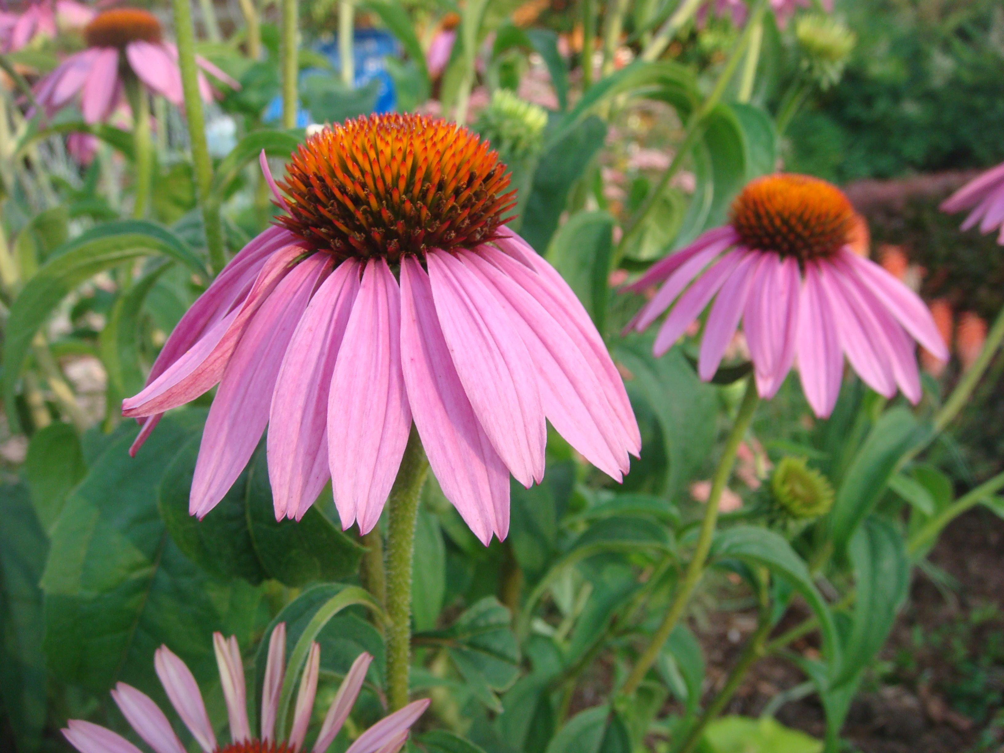 Flower in maine flowers plants garden