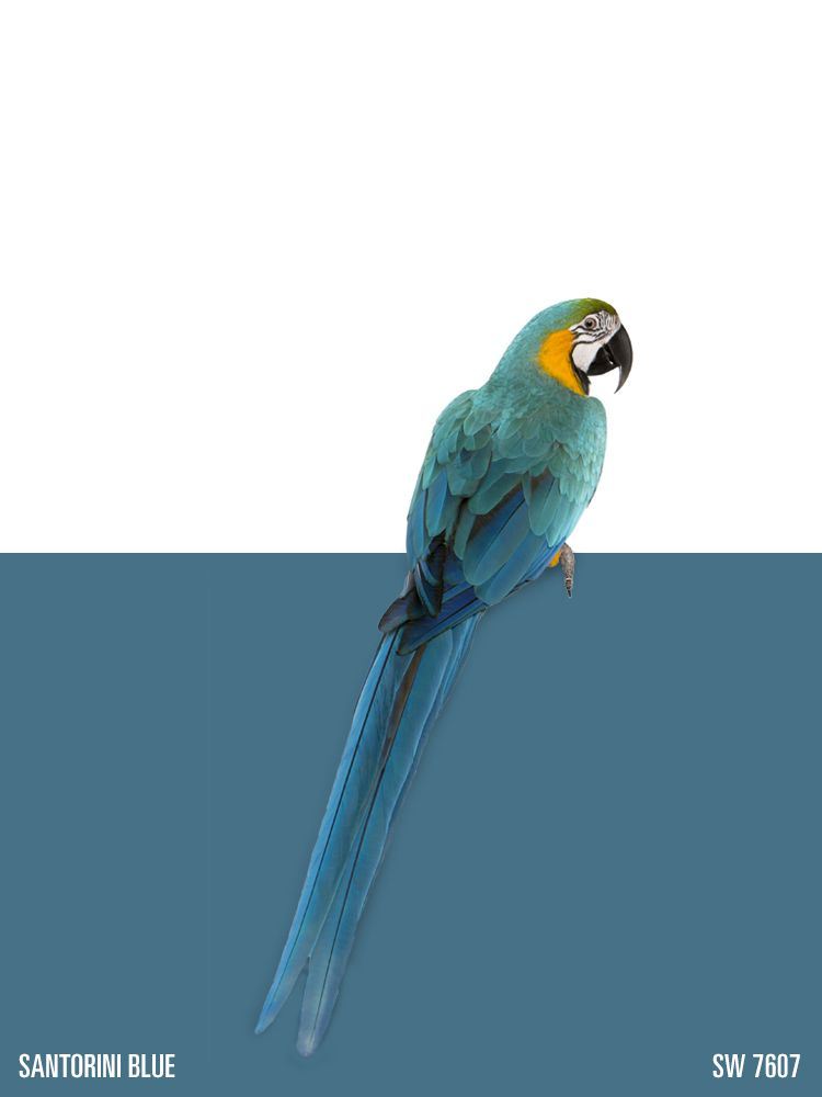 Sherwin williams paint color santorini blue sw 7607 for Santorini blue paint