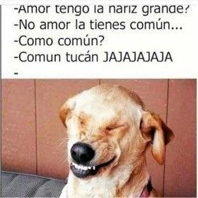Pin By Jazchuvaz On Jjjaaa Funny Spanish Memes Funny Memes Funny Animal Memes