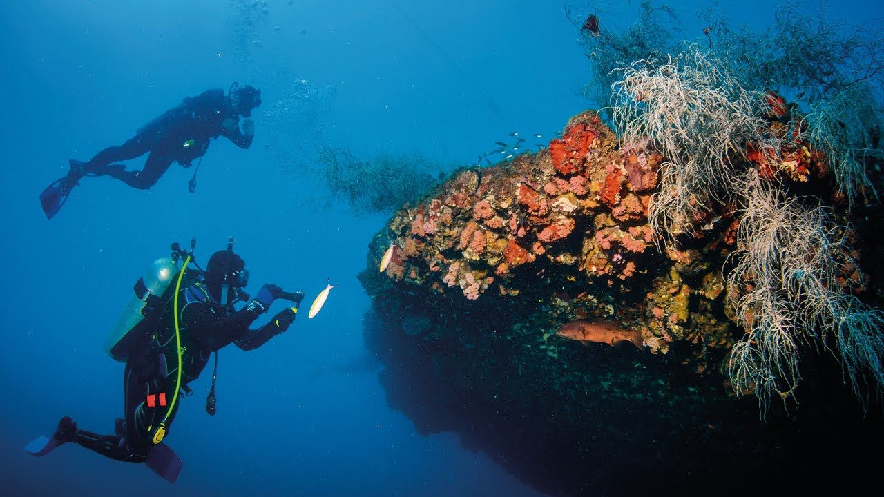 Townsville Australia Diving | Best scuba diving, Diving ...