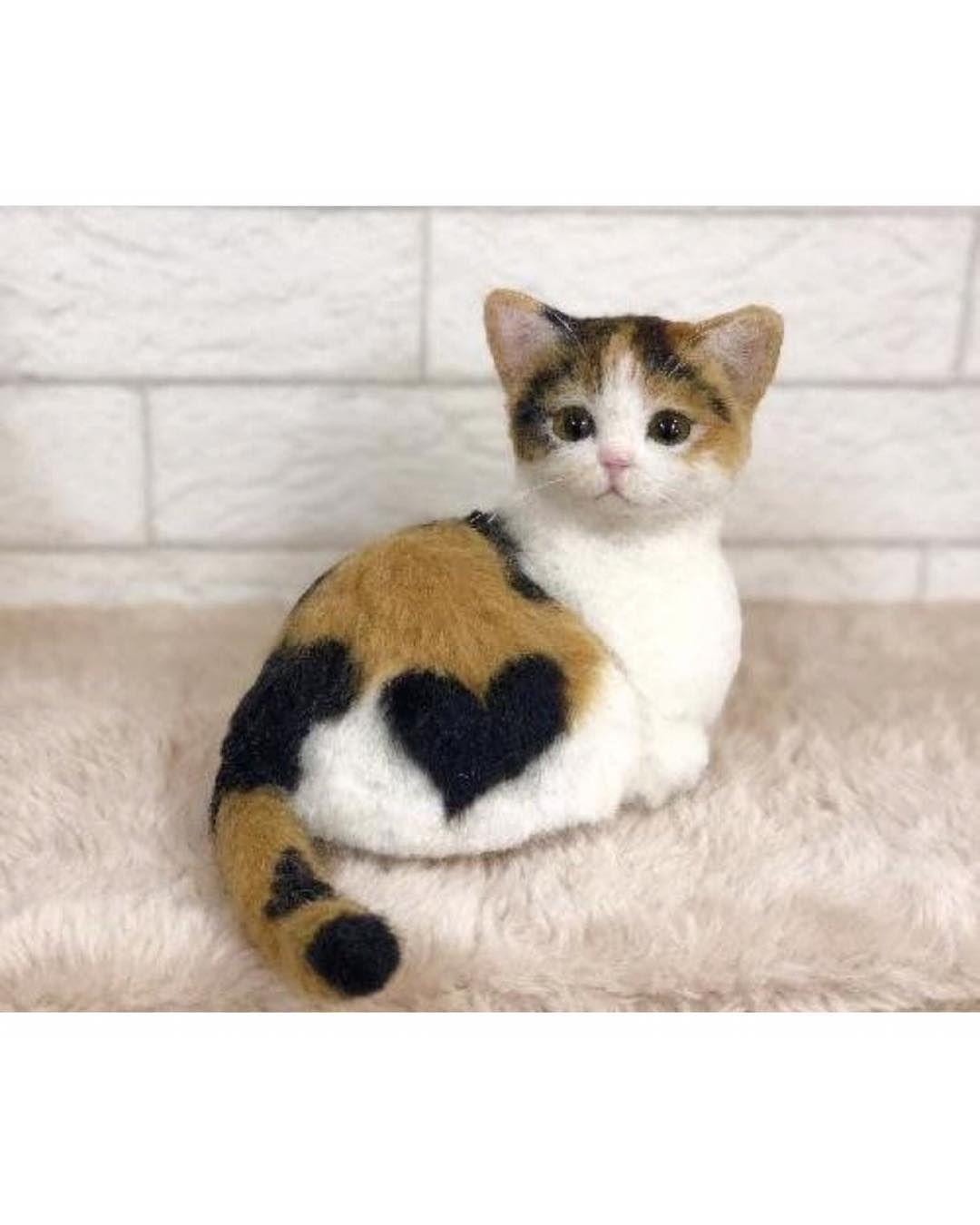 Follow Photos Unknown Follow Gato Cats